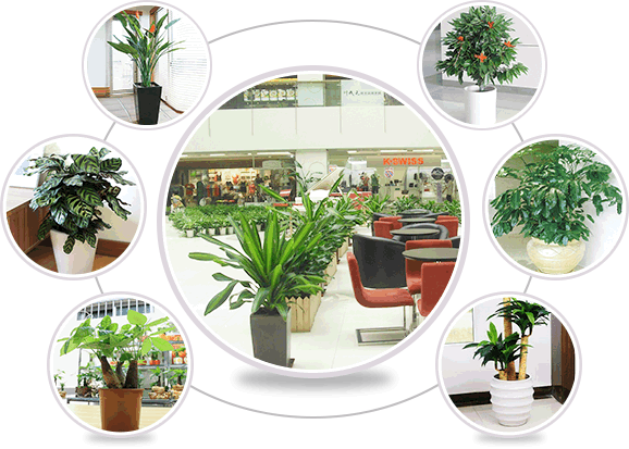 专业绿植租赁公司提供新鲜绿植
