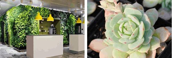上海绿植租赁公司24小时服务