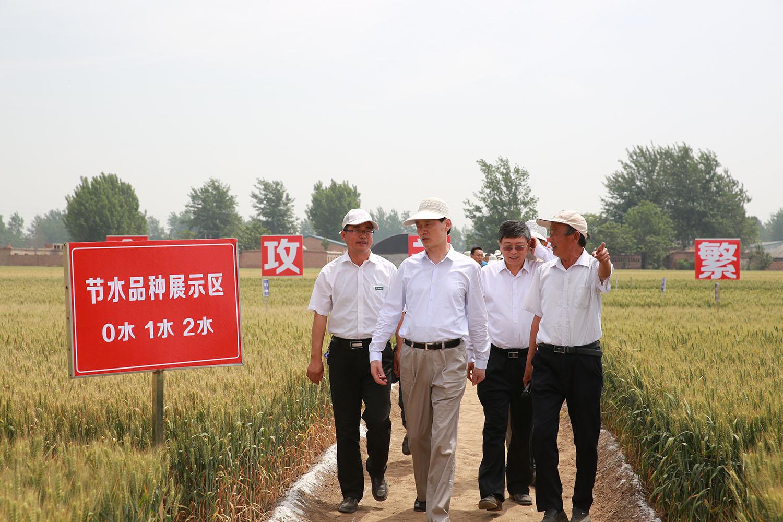 2017年5月,农业部余欣荣副部长一行莅临大地种业马兰研发基地考察小麦联合攻关现场
