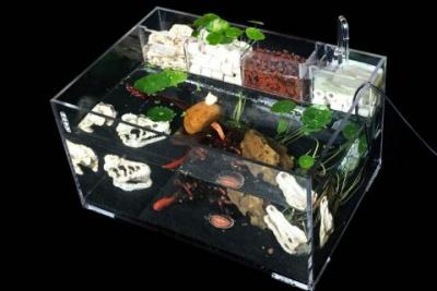 有機玻璃魚缸定制