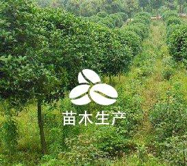 林木種子生產經營資質