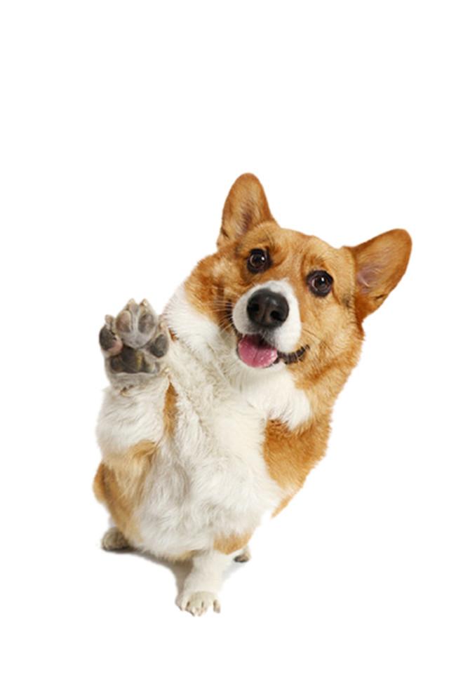 保护狗狗牙齿的好办法