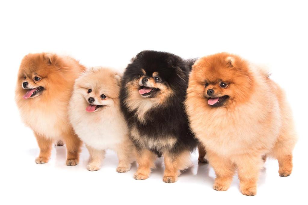 狗狗产后的护理包括哪些方面?