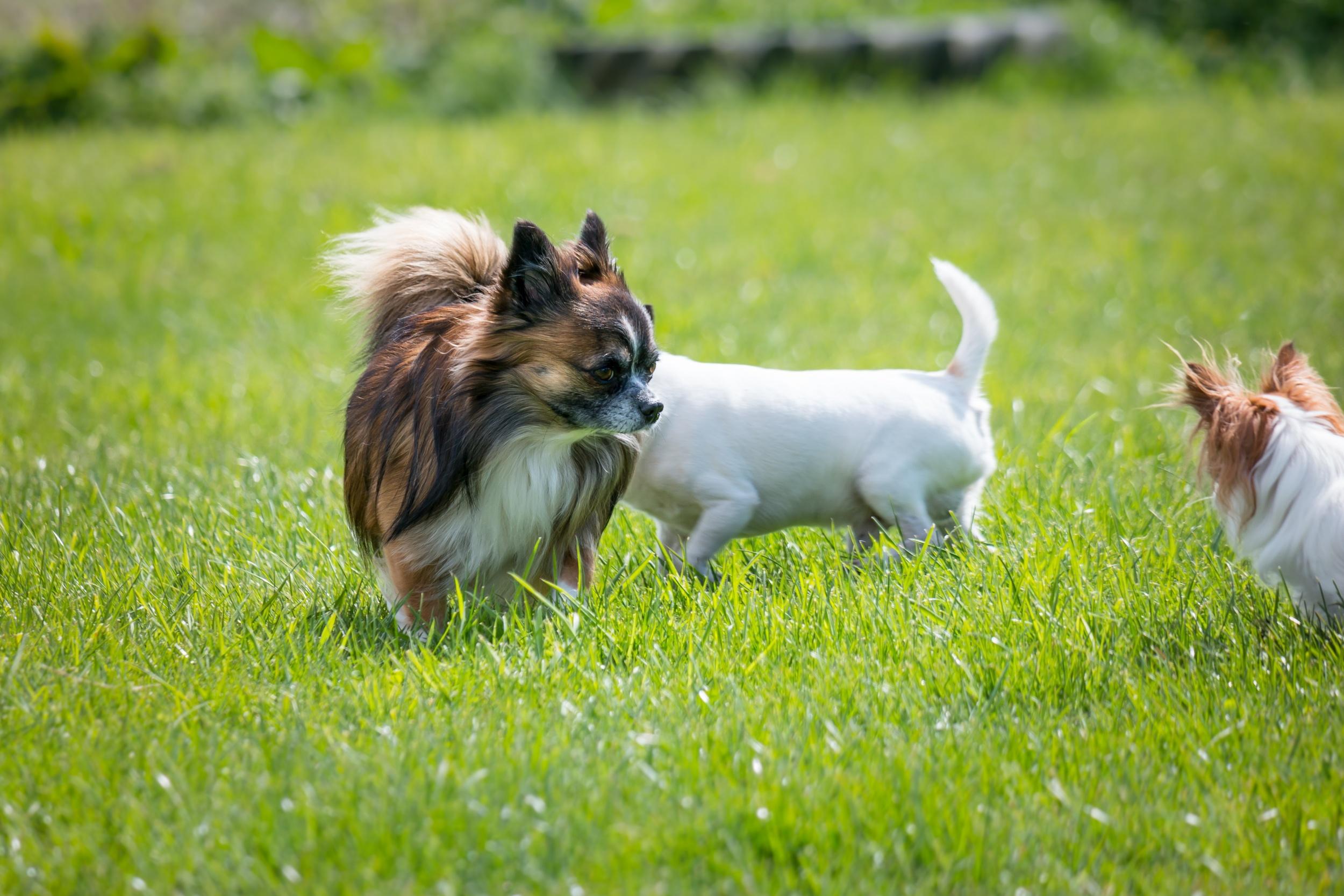 喂养狗狗的知识点