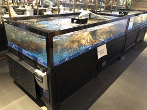 长沙定做海鲜水产鱼池鱼缸厂家