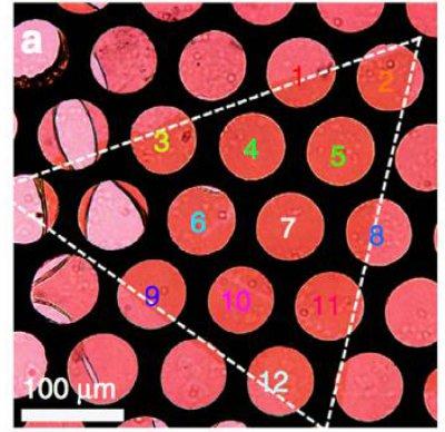 CVD生长二维单层二硫化钨(WS2)纳米片