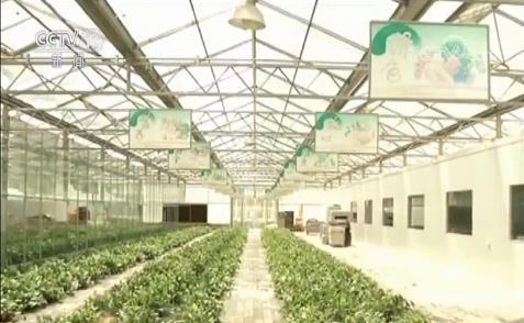 国家质量兴农战略规划(2018—2022...