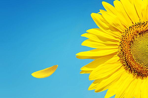 阳光心理减压室