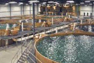 中國循環水養殖要如何運用才能賺大錢