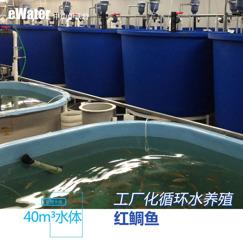 罗非鱼/红鲷苗孵化标粗系统工厂化水�产养殖 循环水处理系统