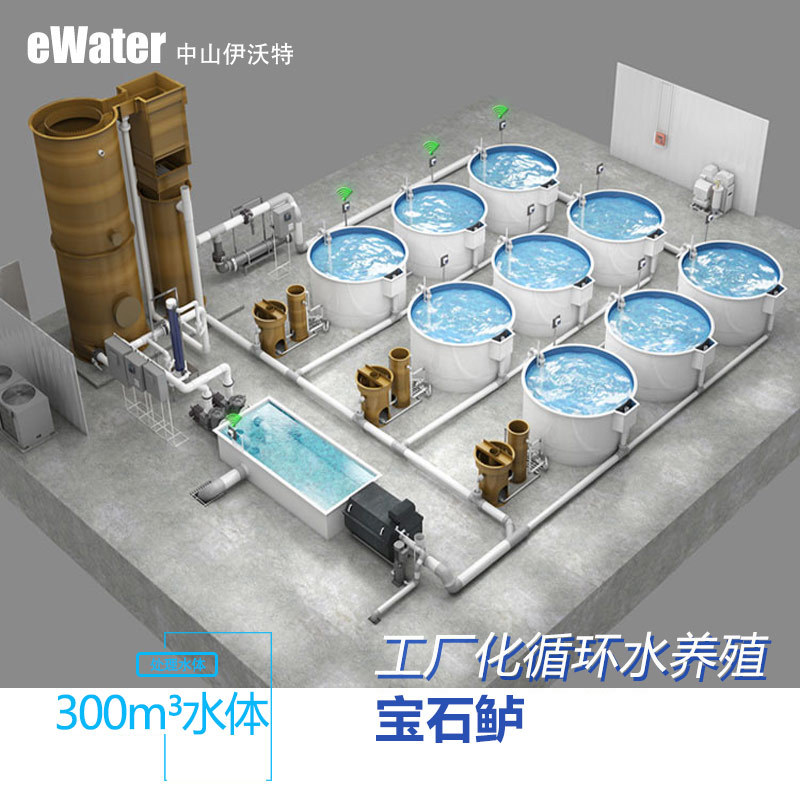 年產60T噸水處理系統 封閉式車間寶石鱸循環水養殖系統RAS