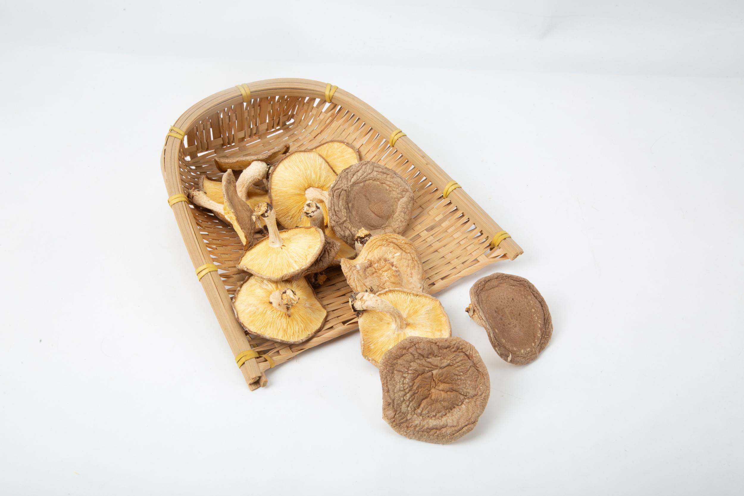 香菇的有几个品种