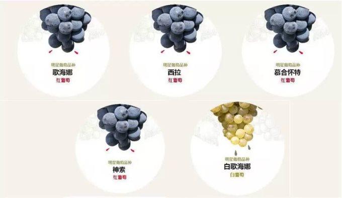大数据解读南罗纳河谷葡萄酒产区