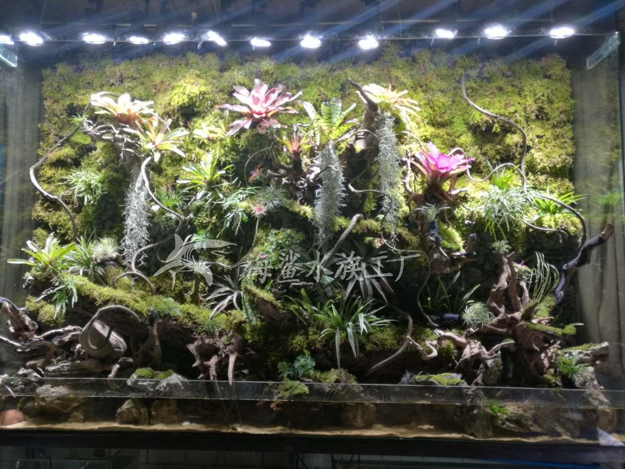 公司大型雨林缸/水陸缸/生態植物墻建造