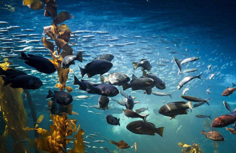 海鲨水族为你介绍水草