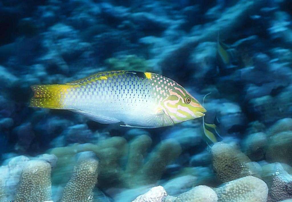 海鲨水族介绍怎么收集观赏鱼饲料