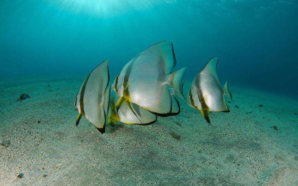 海鲨水族介绍怎样选择人工饲料