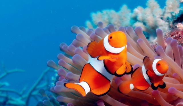海鲨水族介绍热带鱼