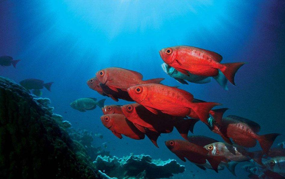 海鲨水族介绍观赏鱼的习性