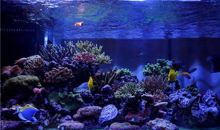 海鲨水族介绍水质的测试