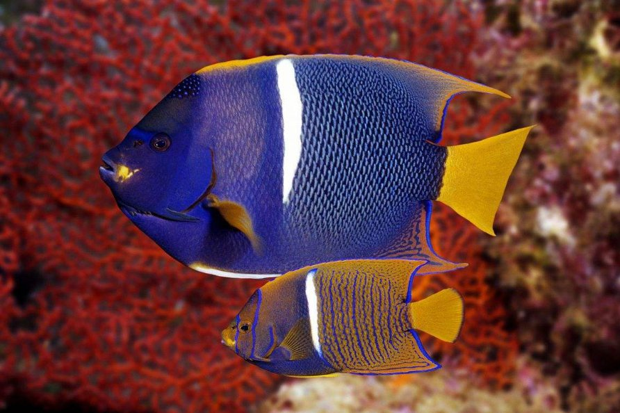海鲨水族介绍如何预防鱼生病