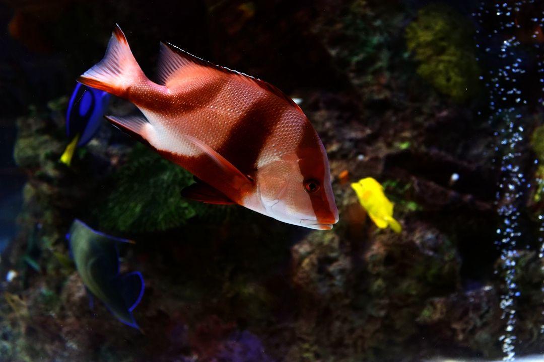海鲨水族介绍亚克力鱼缸中的鱼病