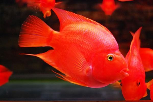 家庭海水鱼缸的配置有哪些