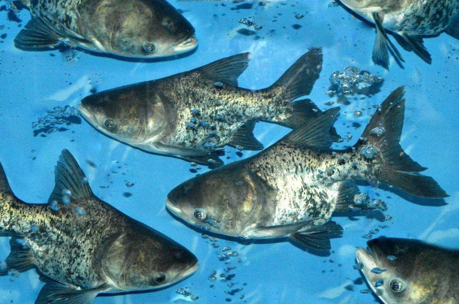 海鲨水族介绍怎样检查鱼病