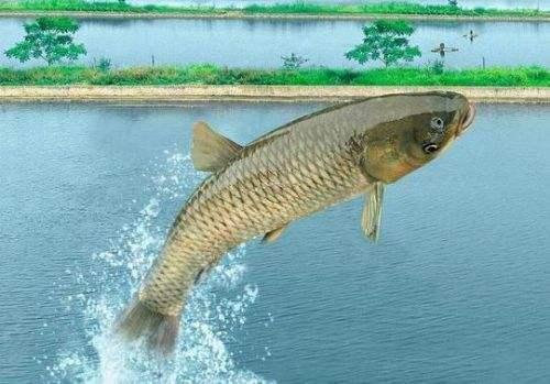 海鲨水族介绍在定做海鲜池中养鱼要注意什么