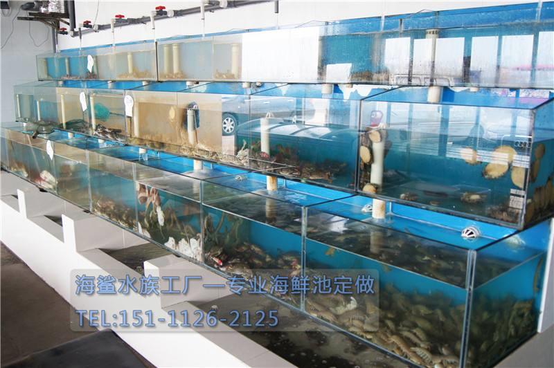 海鲨水族工厂介绍二氧化碳的作用