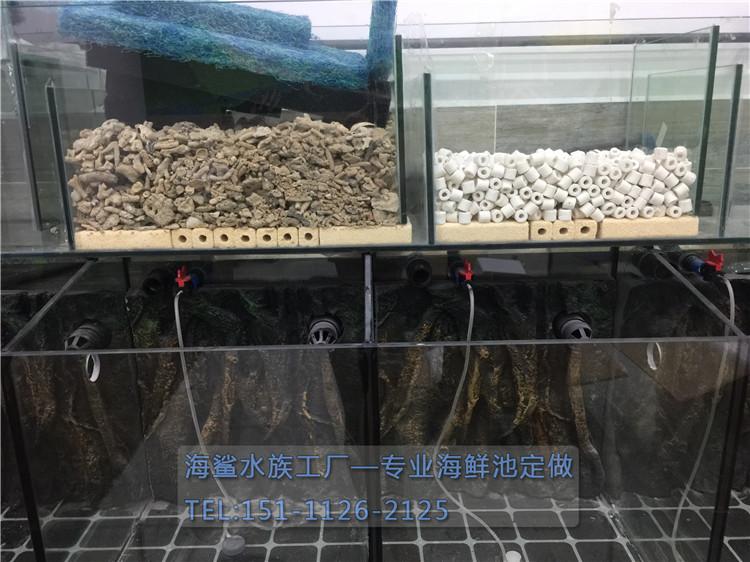 海鲨水族工厂介绍鱼缸背景的布置