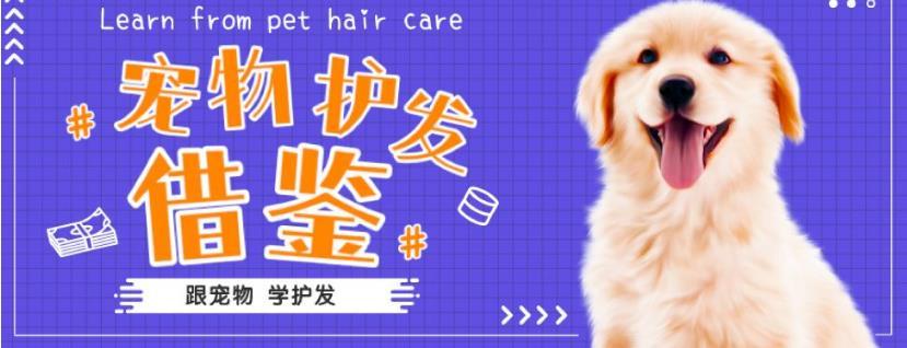 毛发,宠物毛发,收购长发网提供