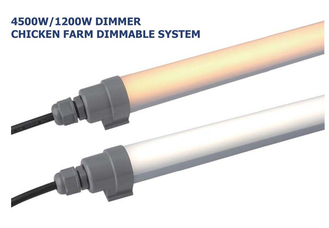 Chicken Farm Lighting Solution