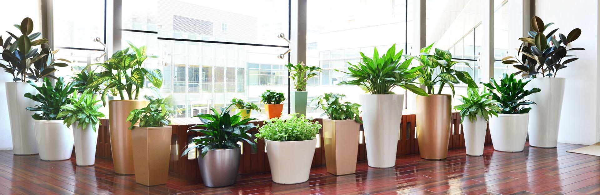 Hydro Series Planter