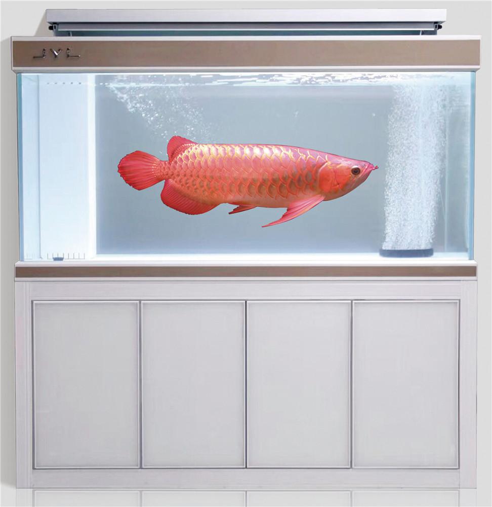 新款超白龙鱼缸A款