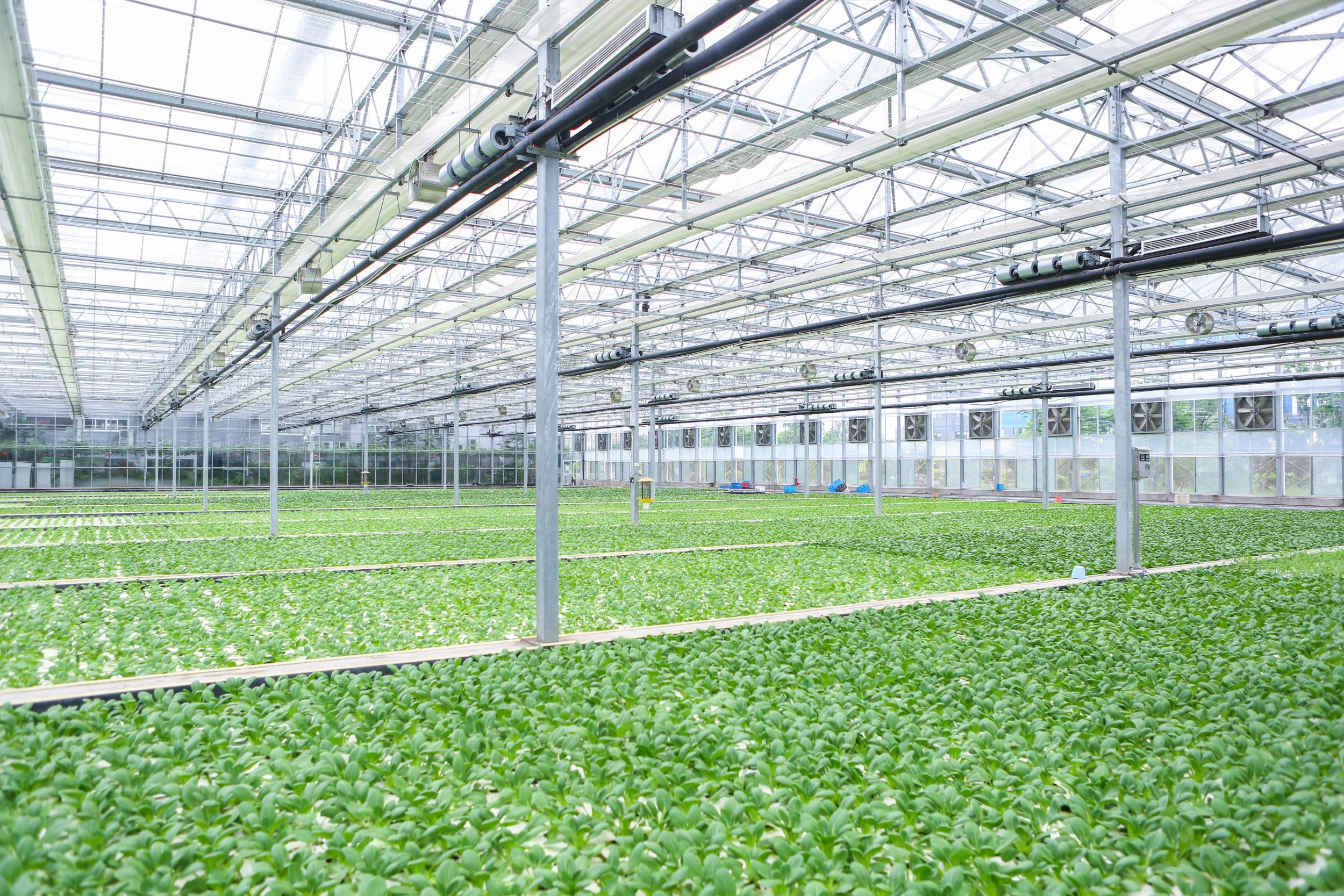 綠葉蔬菜漂浮技術