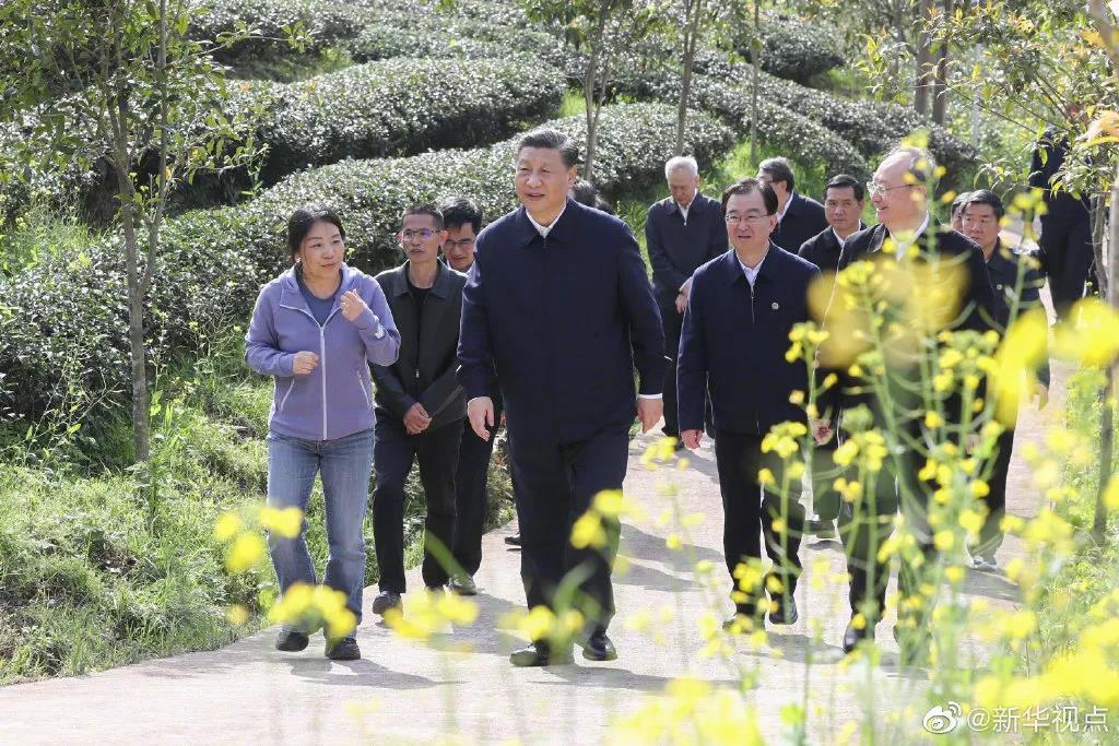 总书记察看武夷山春茶长势:把茶文化、茶产业、茶科技这篇文章做好