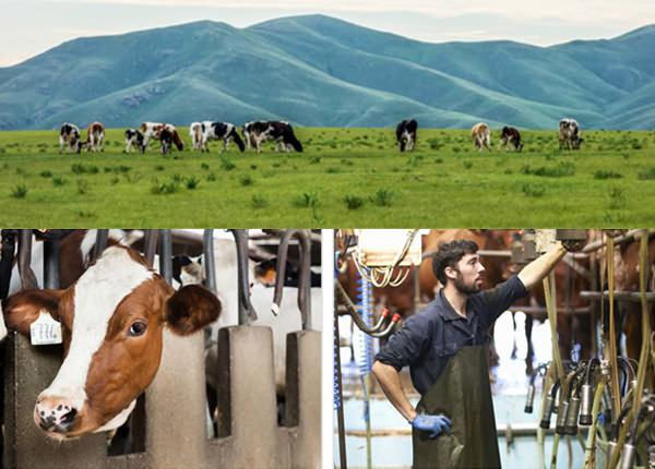 溯源畜牧称重管理系统
