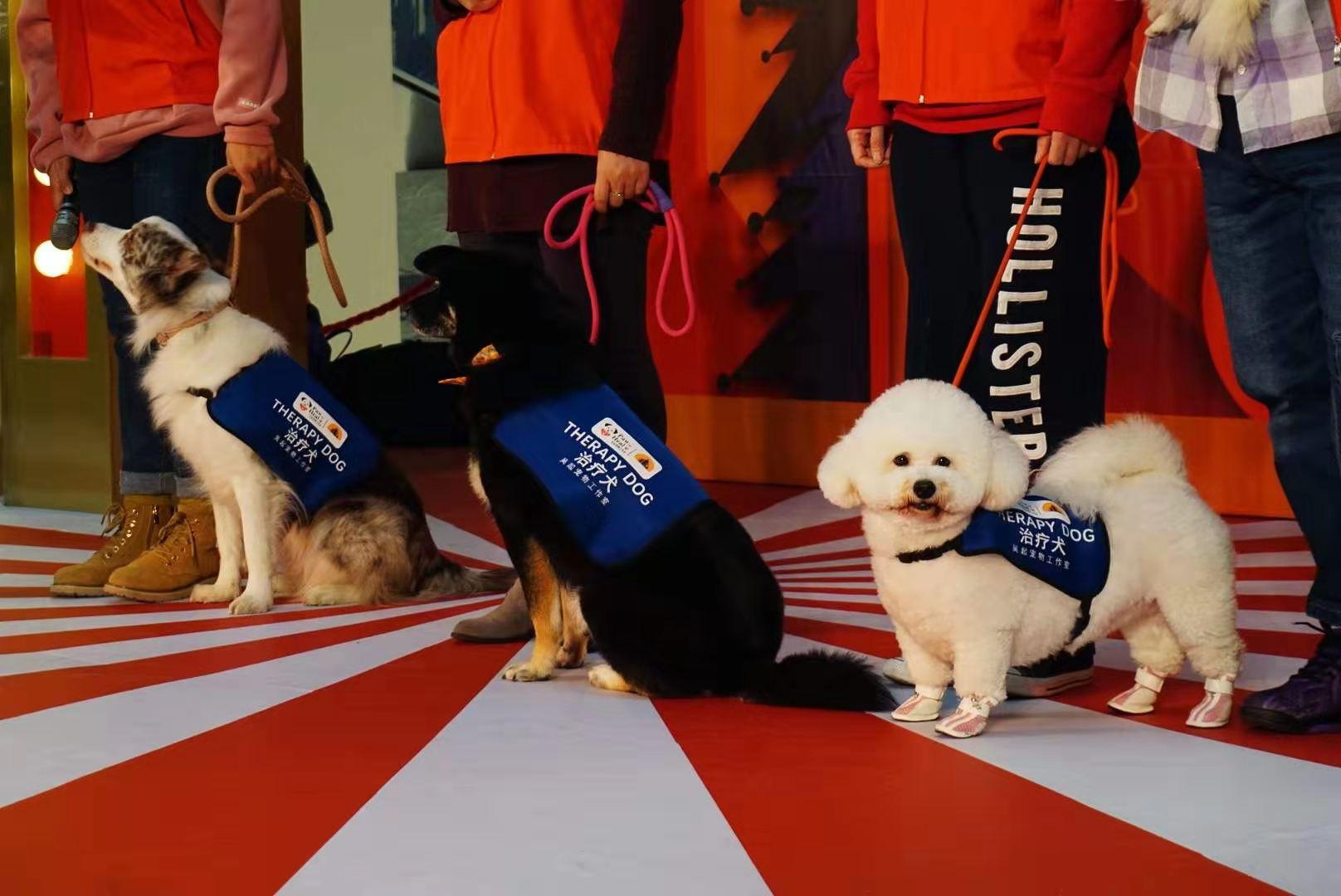 PUPPY SALON现身上海万象城,助力治疗犬学员招募