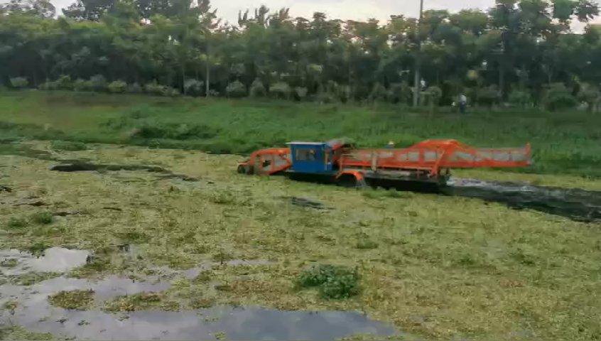 新河渠水葫芦打捞清理作业中