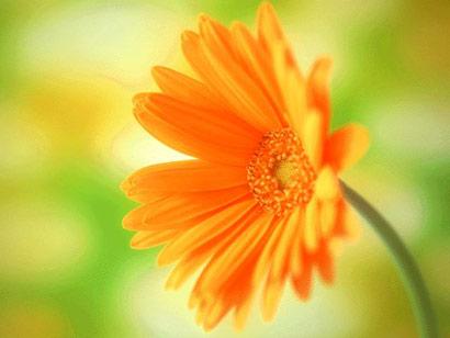 一日禅:做人 要懂得感恩