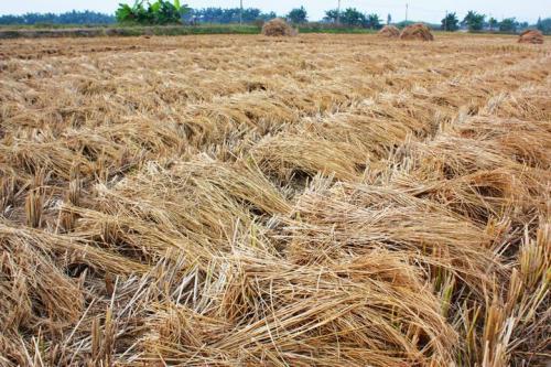 关于申报2021年农作物秸秆利用项目的通知