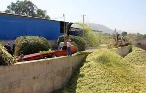 农作物秸秆还田综合利用技术综述