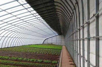 蔬菜大棚管