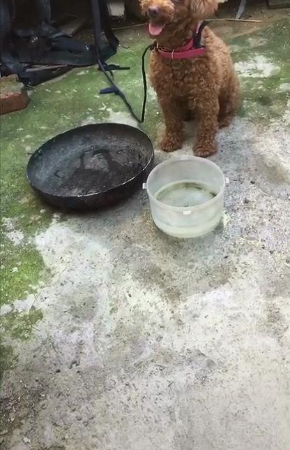 狗狗送回农村,交给老妈养了两个月,再见时...