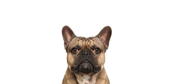 人感冒会传染给狗吗,狗感冒咳嗽吃什么药
