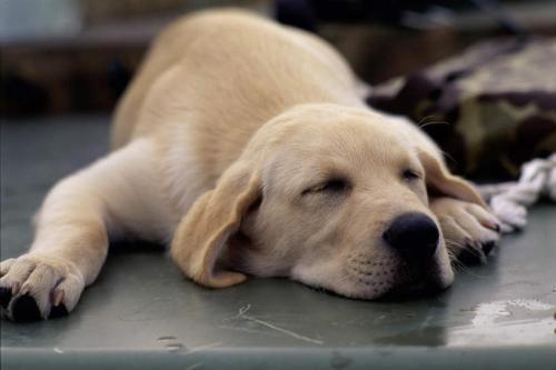 狗狗呕吐不吃东西怎么办,狗狗拉稀不吃东西...