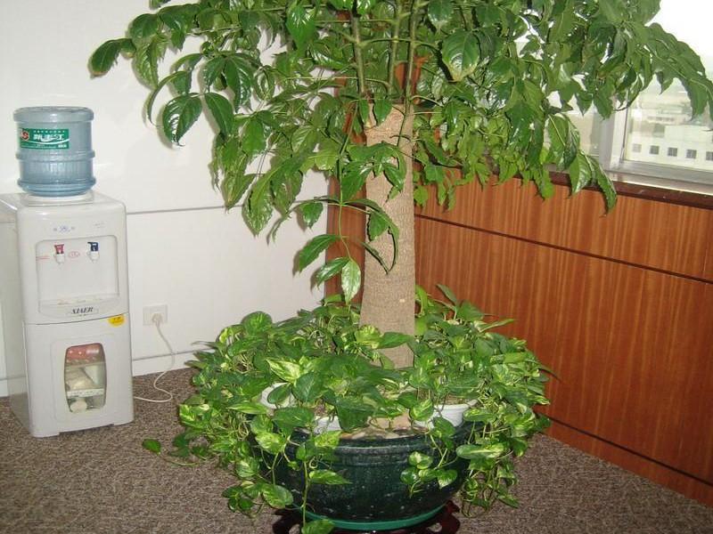 上海植物租赁公司室内观叶植物是如何度过寒冷的冬季的