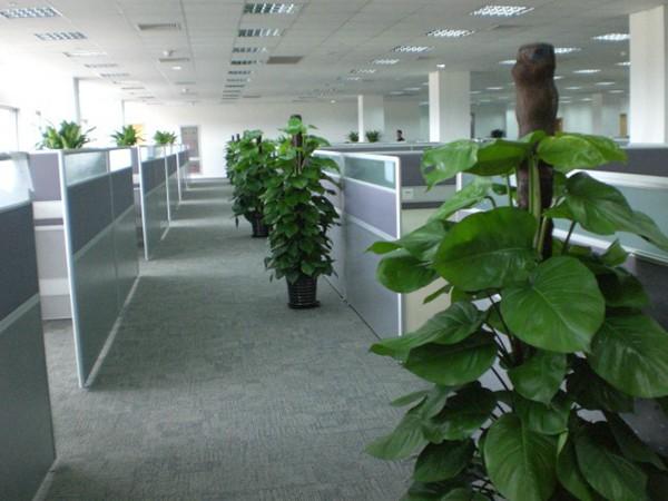 上海植物租赁公司租摆阳台植物由于阳台空间有限只能采用容器客土栽植