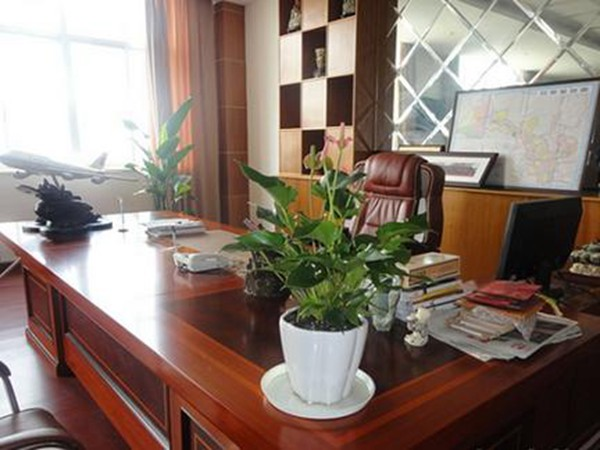 上海绿植租赁公司租摆的植物能除尘和吸收PM2.5吗?